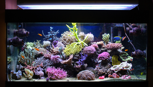 Comment choisir son aquarium